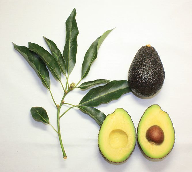6 avocado