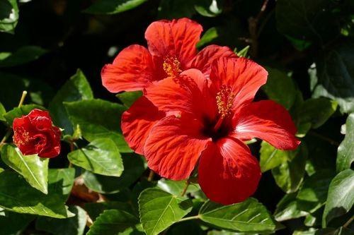 9- Shoe flower