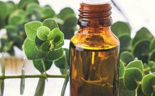15 Eucalyptus Oil